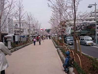 160407sakura2